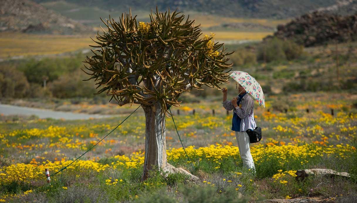 sudafrica-deserto-piante
