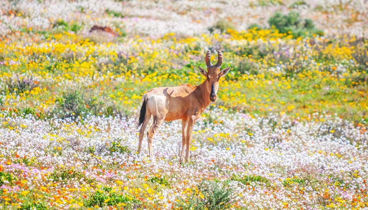 sudafrica-Namaqua-primavera