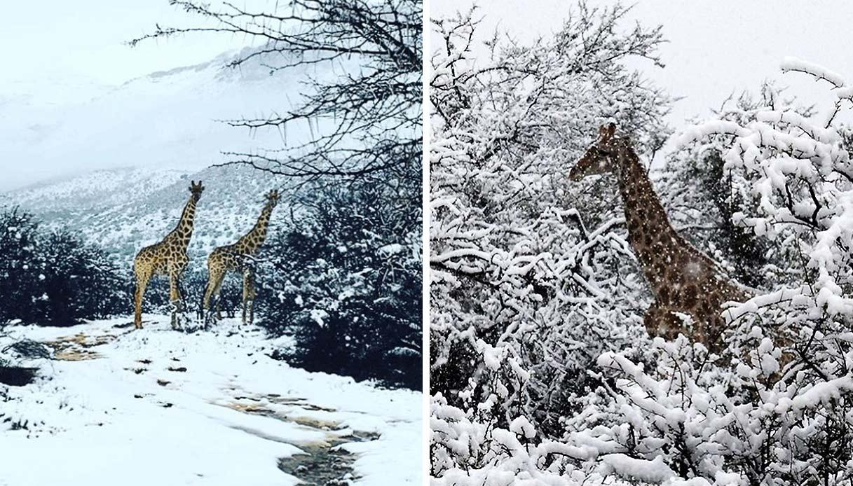 sudafrica-neve-eccezionale