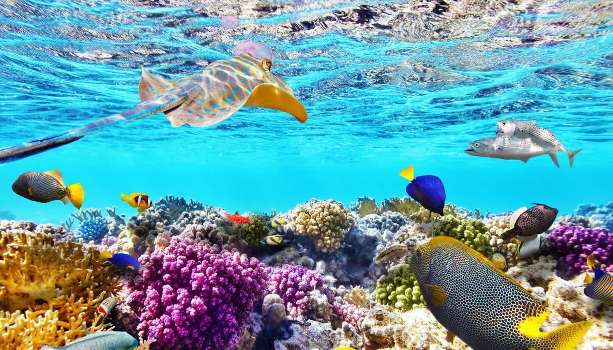 Sharm el-Sheikh - Barriera corallina