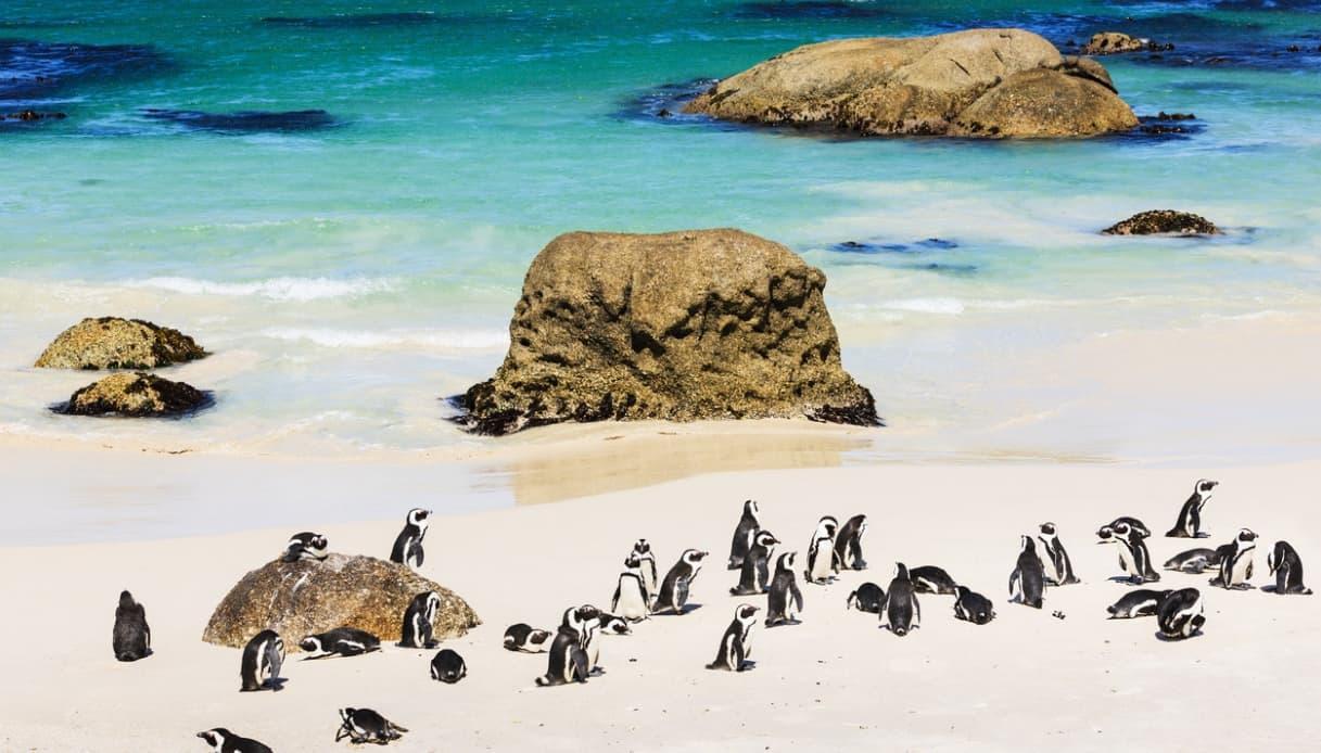 Sudafrica coi bambini
