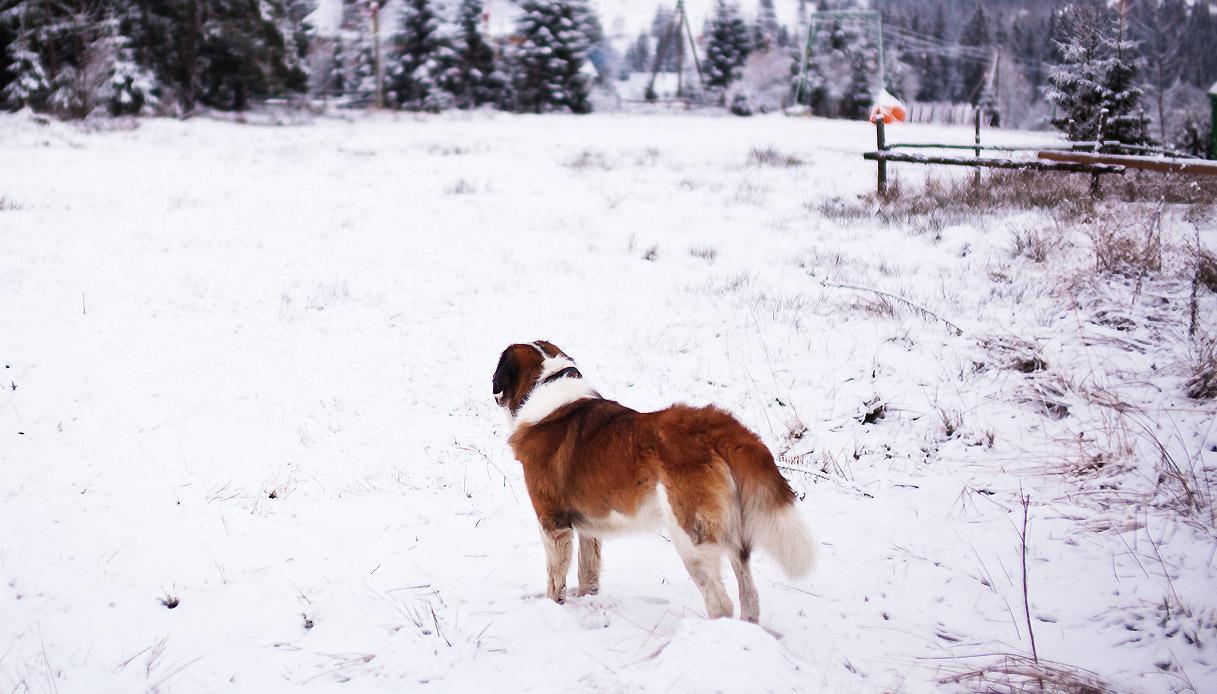 san-bernardo-svizzera-passeggiate-neve-inverno