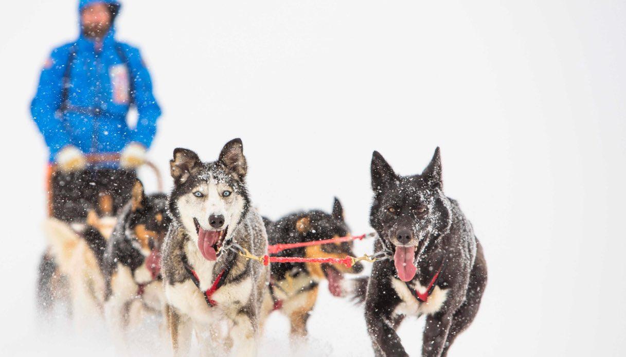 In vacanza al Circolo Polare Artico su una slitta trainata da cani
