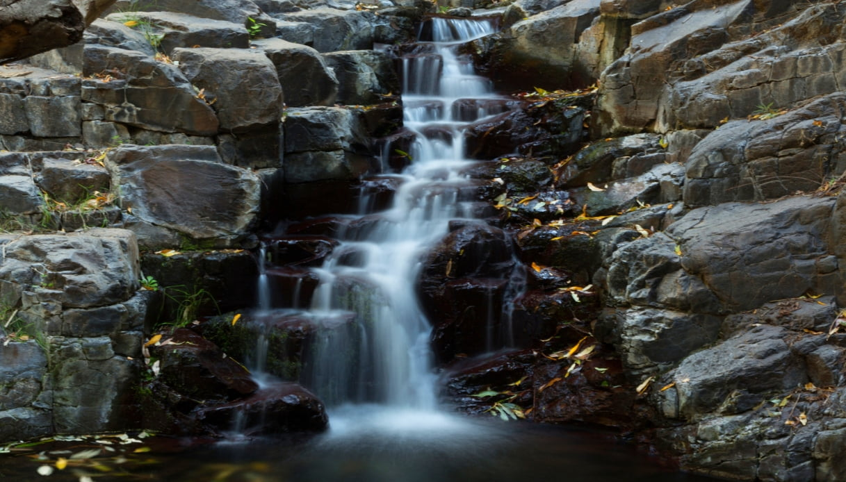 Foresta pluviale - La Gomera