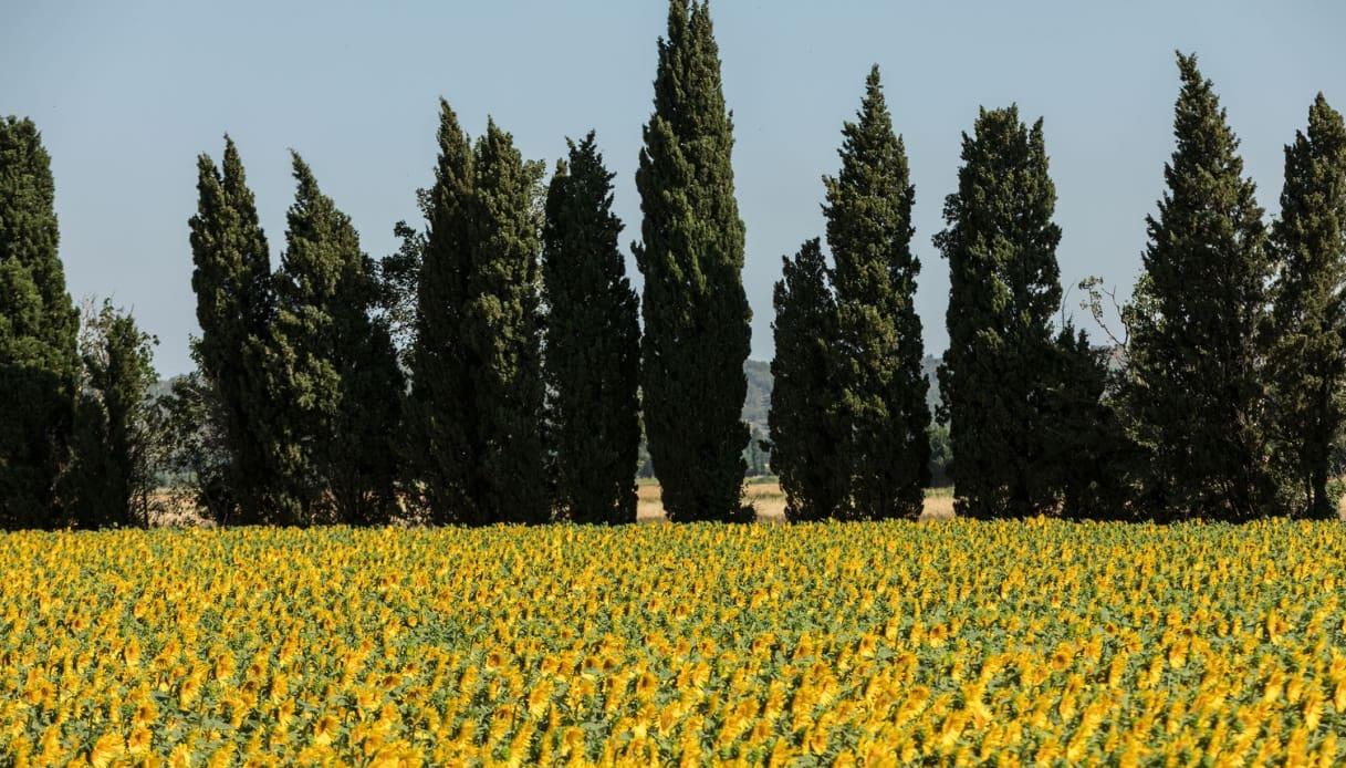 """I luoghi del film """"Van Gogh - Sulla soglia dell'eternità"""""""
