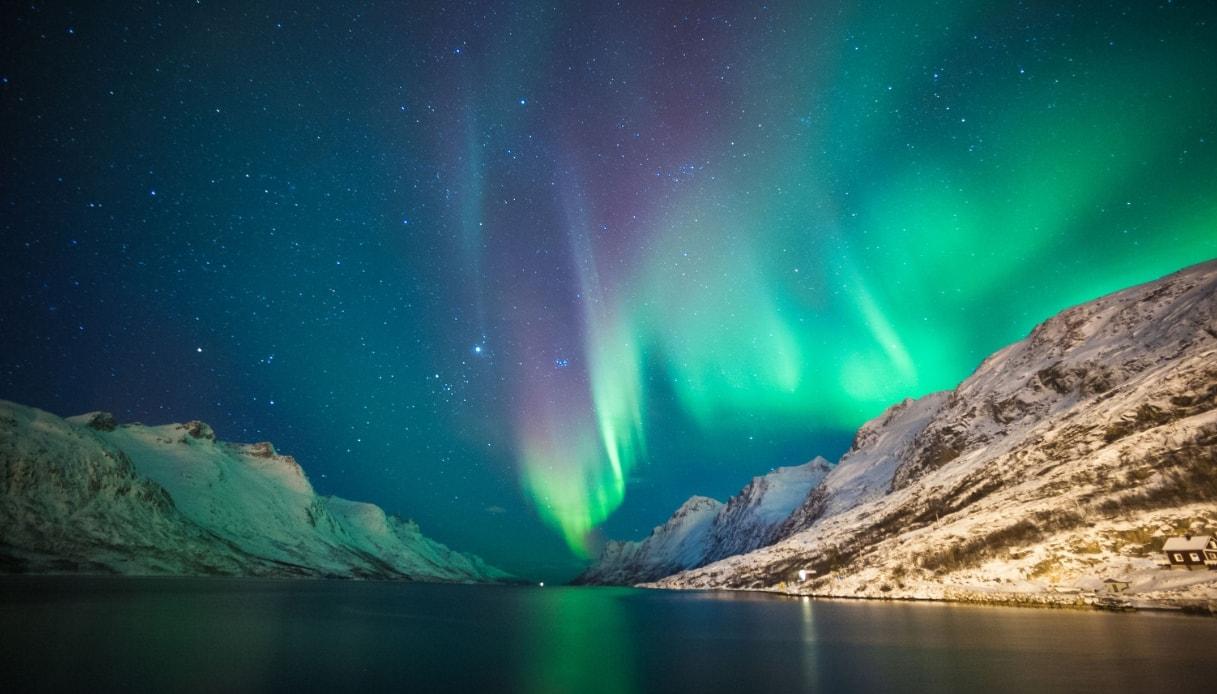 Nuotare con le orche, sotto l'aurora boreale il safari nei fiordi norvegesi