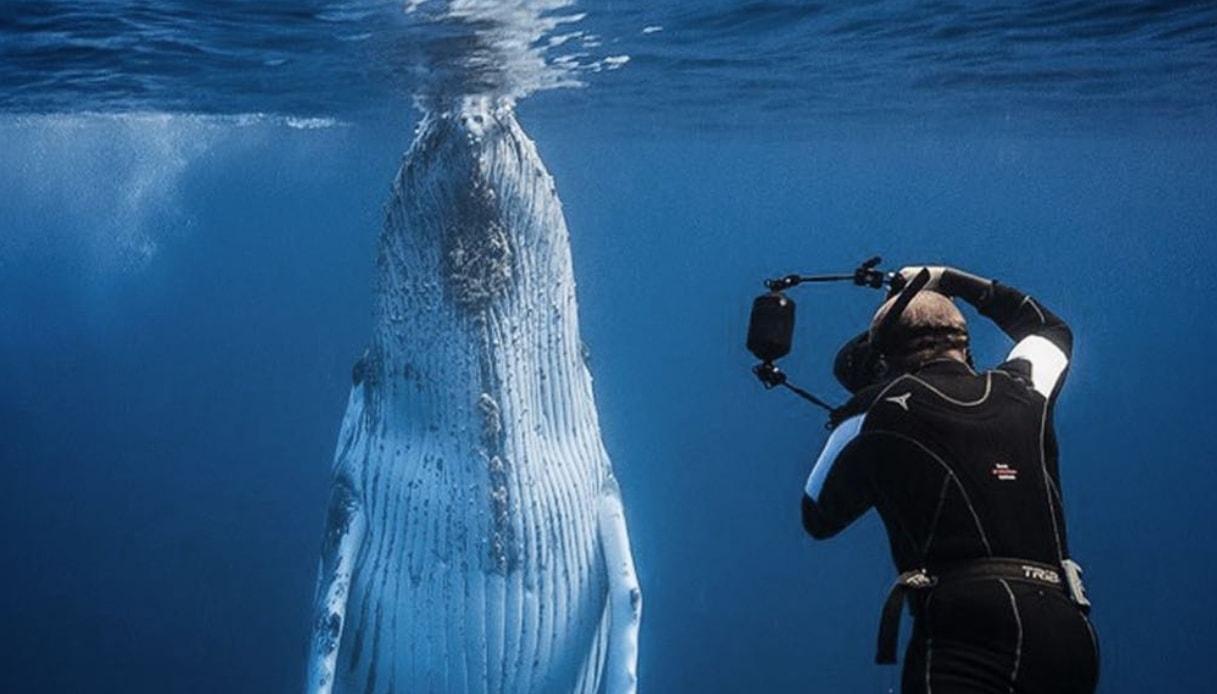 nuotare con le orche