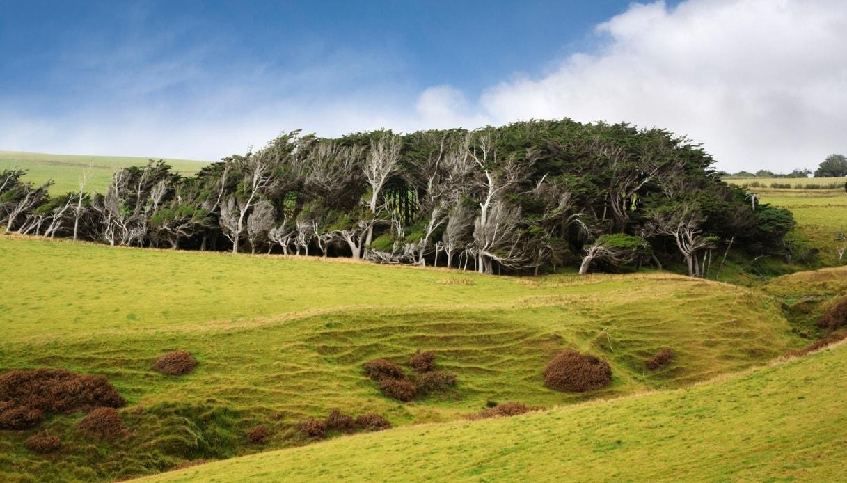 """Slope Point, la foresta """"aggrovigliata"""" della Nuova Zelanda"""