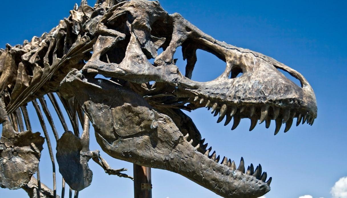 Teschio T-Rex in montana
