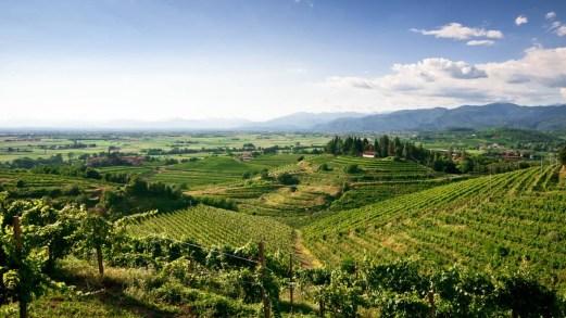 Friuli Venezia Giulia, la Strada del Vino tra viti e sci
