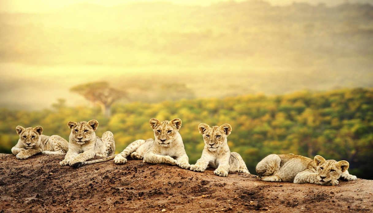 Safari in Africa dove andare
