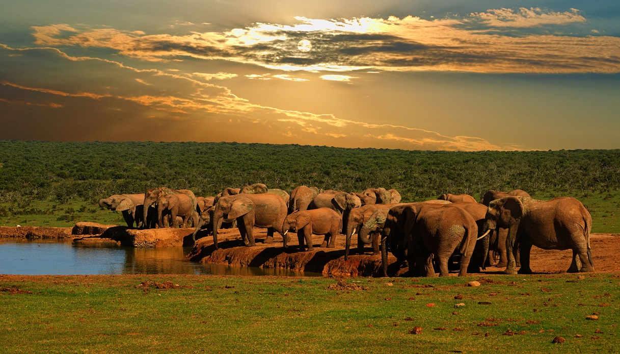 Viaggio in Sudafrica: cosa vedere