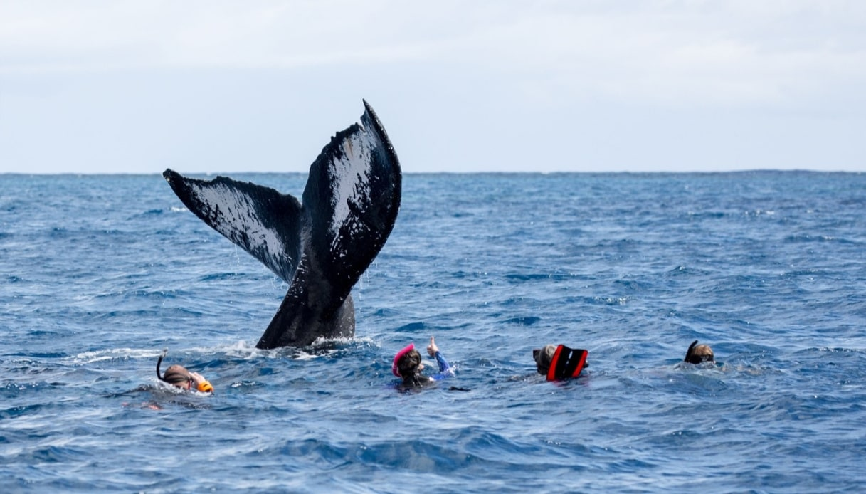 nuotare balene