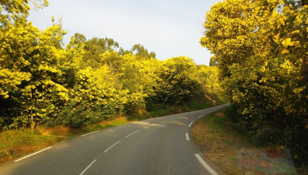 Route de Mimosa
