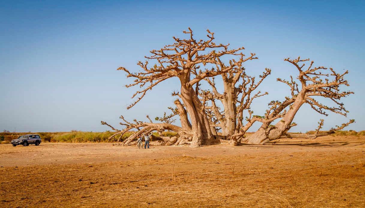Viaggio Senegal: cosa fare