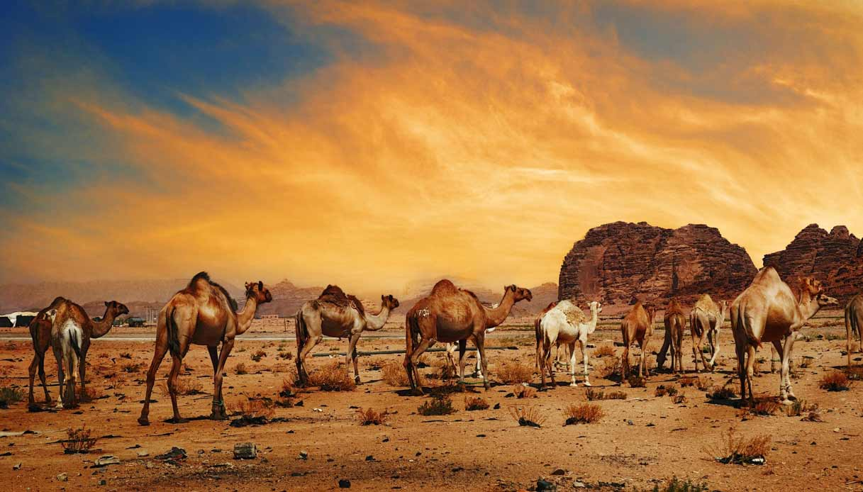 dubai-deserto-riserva