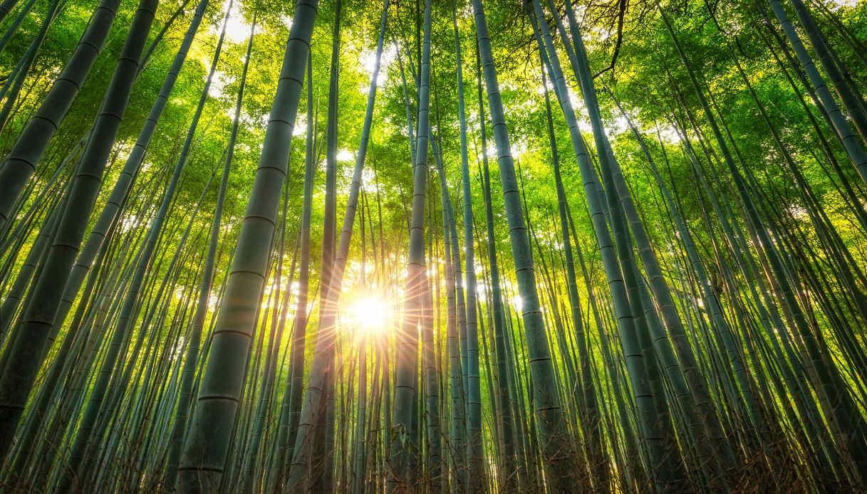 Viaggio in Giappone: consigli di viaggio