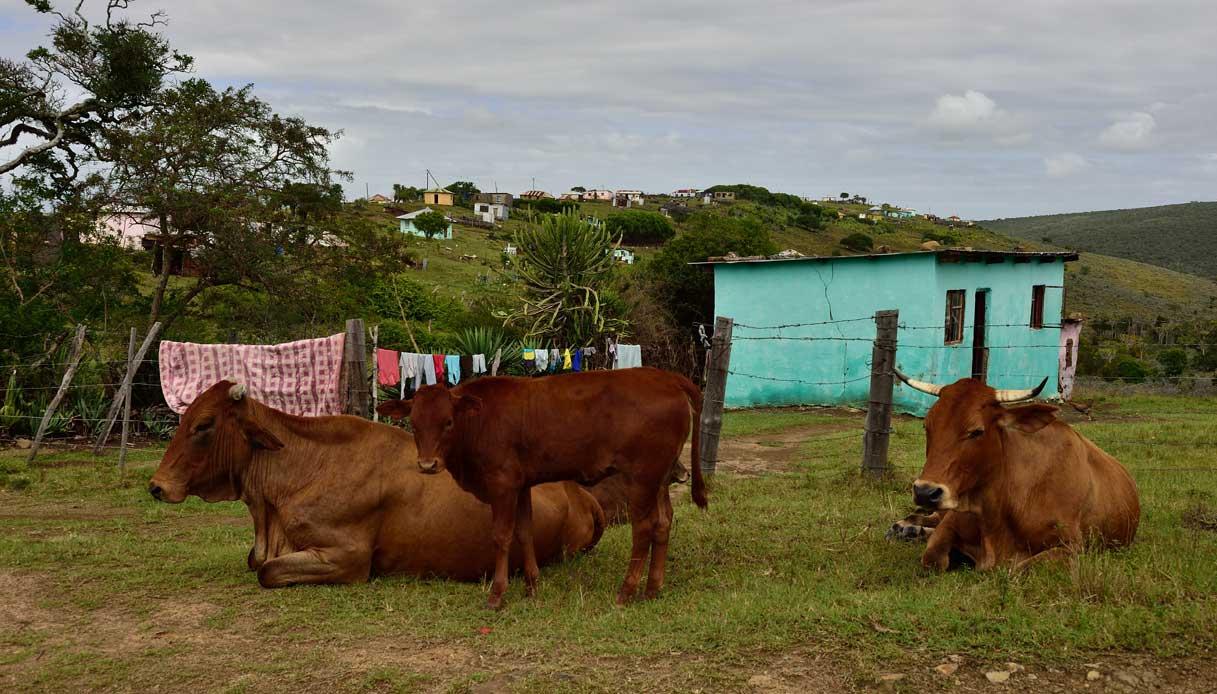 Qunu_Eastern_Cape,_Sudafrica