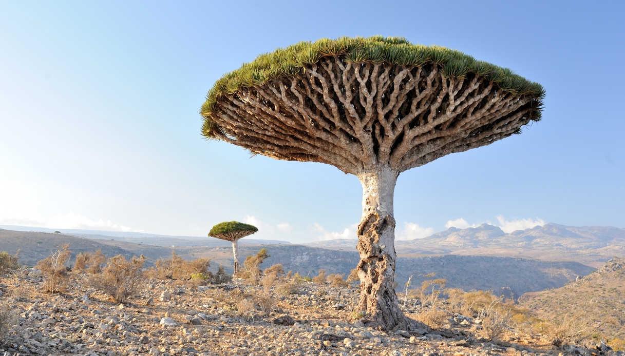 Viaggio sull'isola di Socotra in Yemen