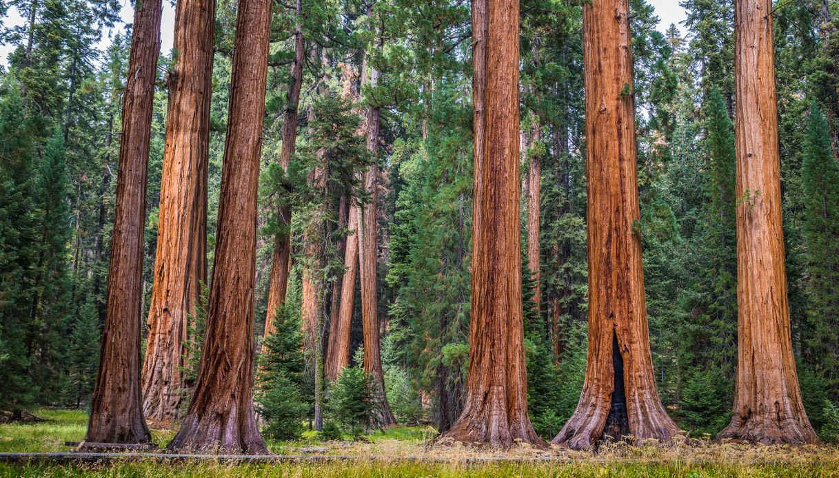 Il Sequoia National Park, tappa del Pacific Crest Trail