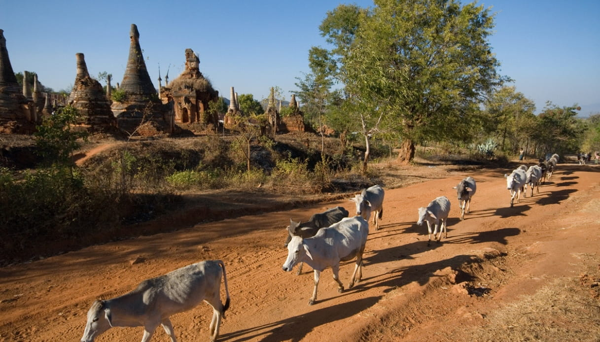 templi birmania