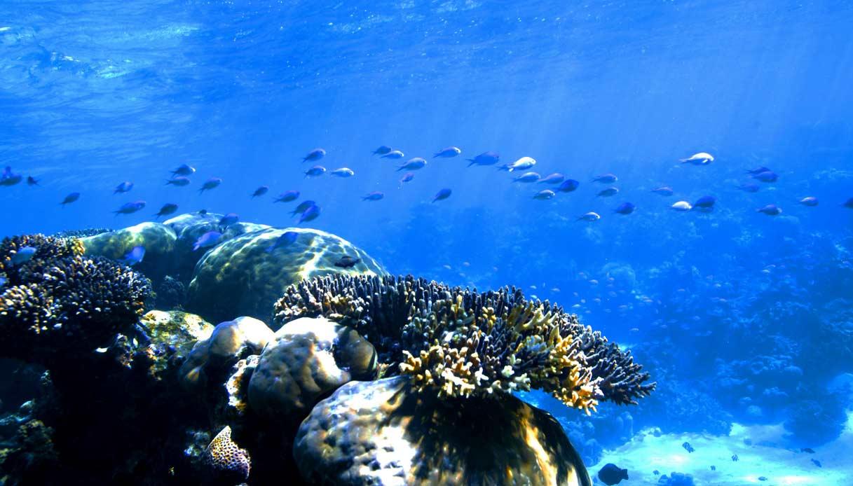 coral-bay-australia