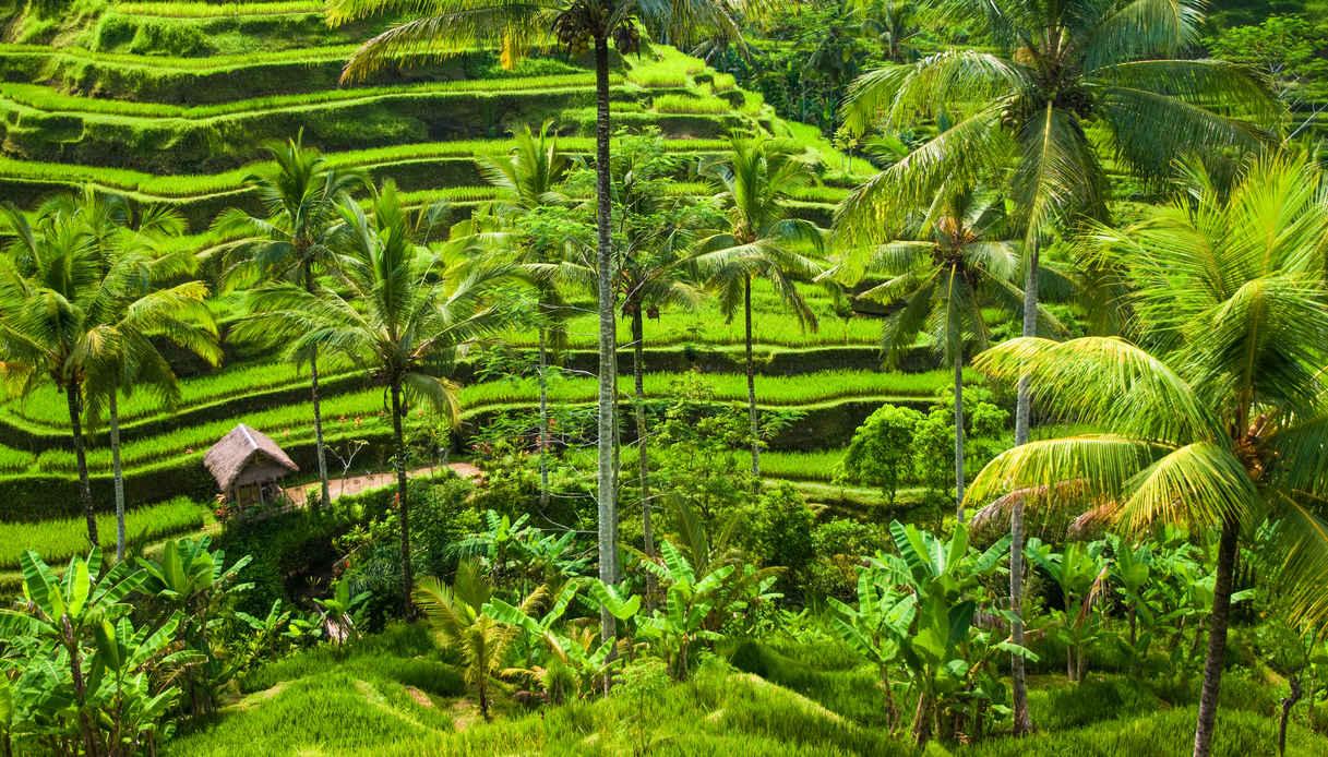 7 giorni a Bali