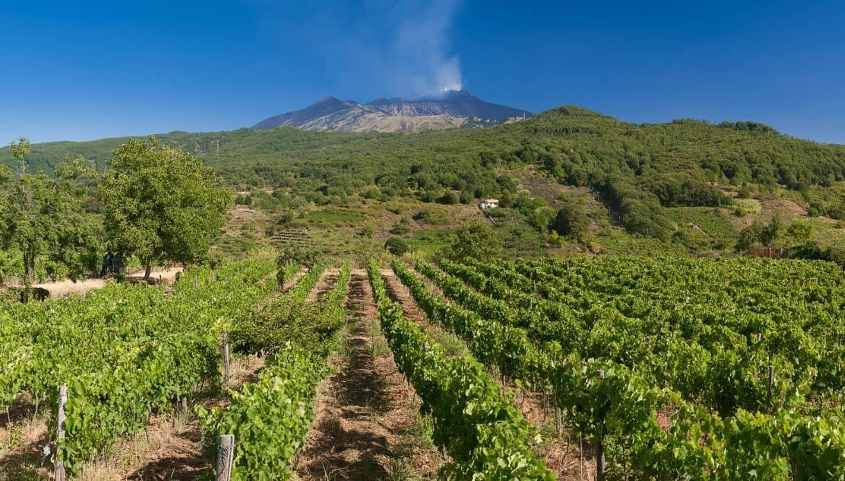 Forbes consiglia l'Etna per il turismo vitivinicolo