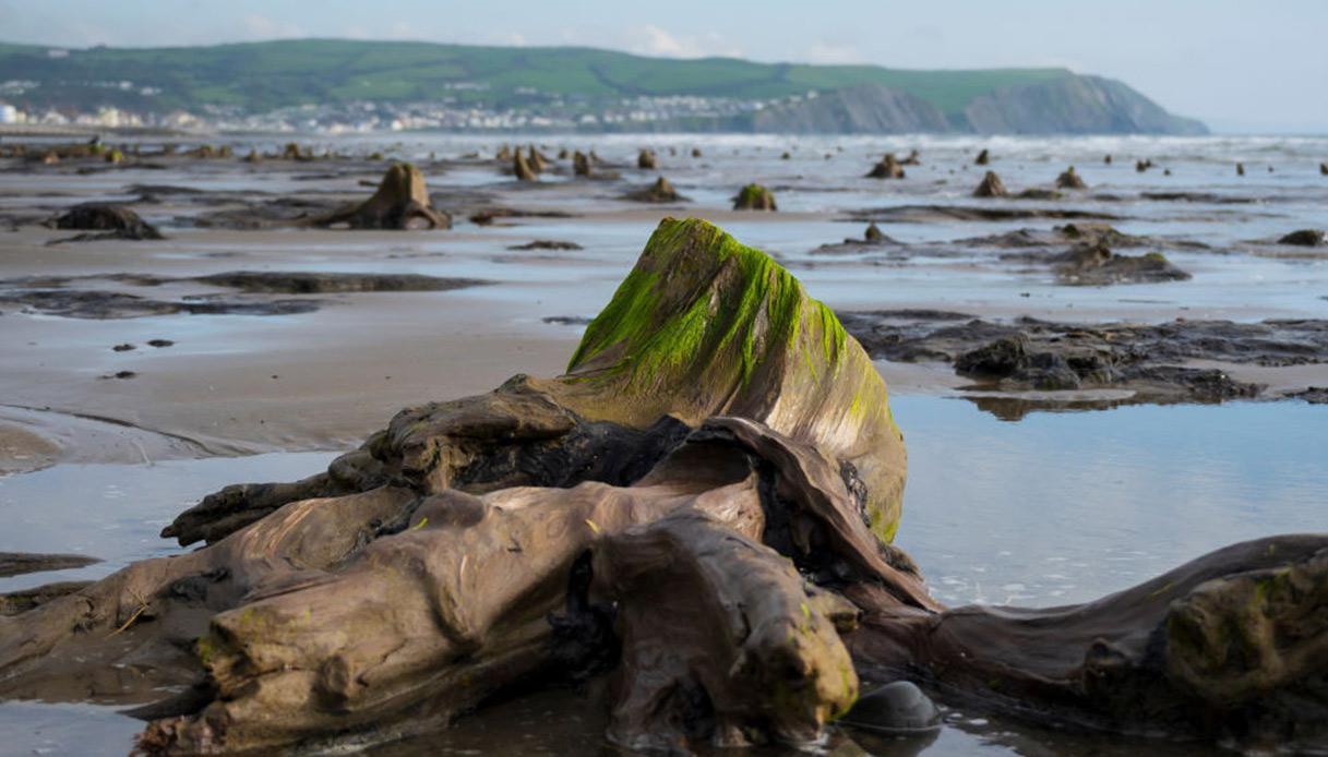 La leggendaria foresta sommersa del Galles, riportata alla luce da una tempesta
