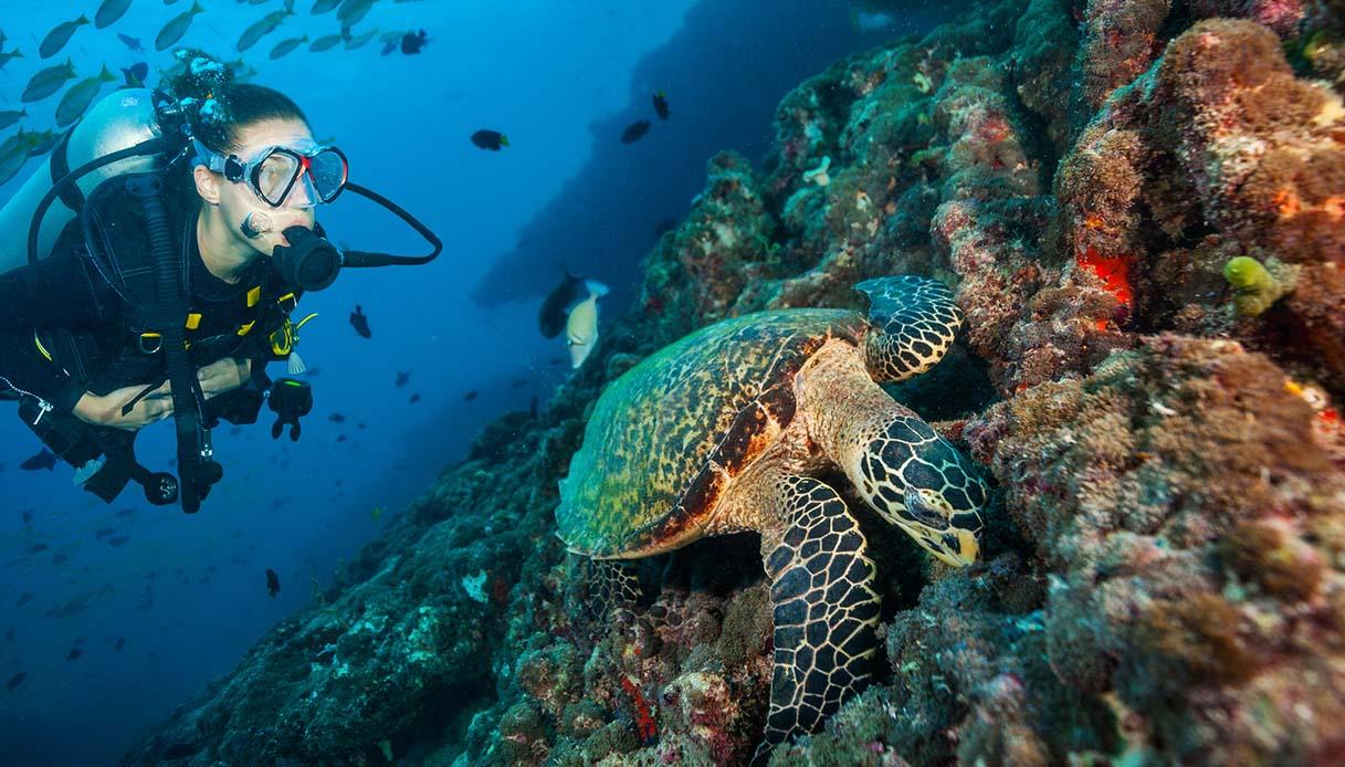 Se ti prenderai cura di queste tartarughe, avrai un lavoro alle Maldive