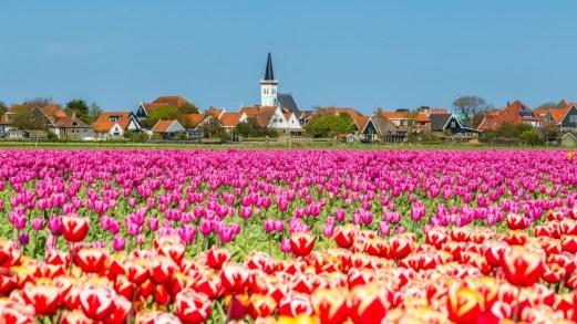 """In treno a vapore e in bicicletta, lungo il """"triangolo storico"""" d'Olanda"""