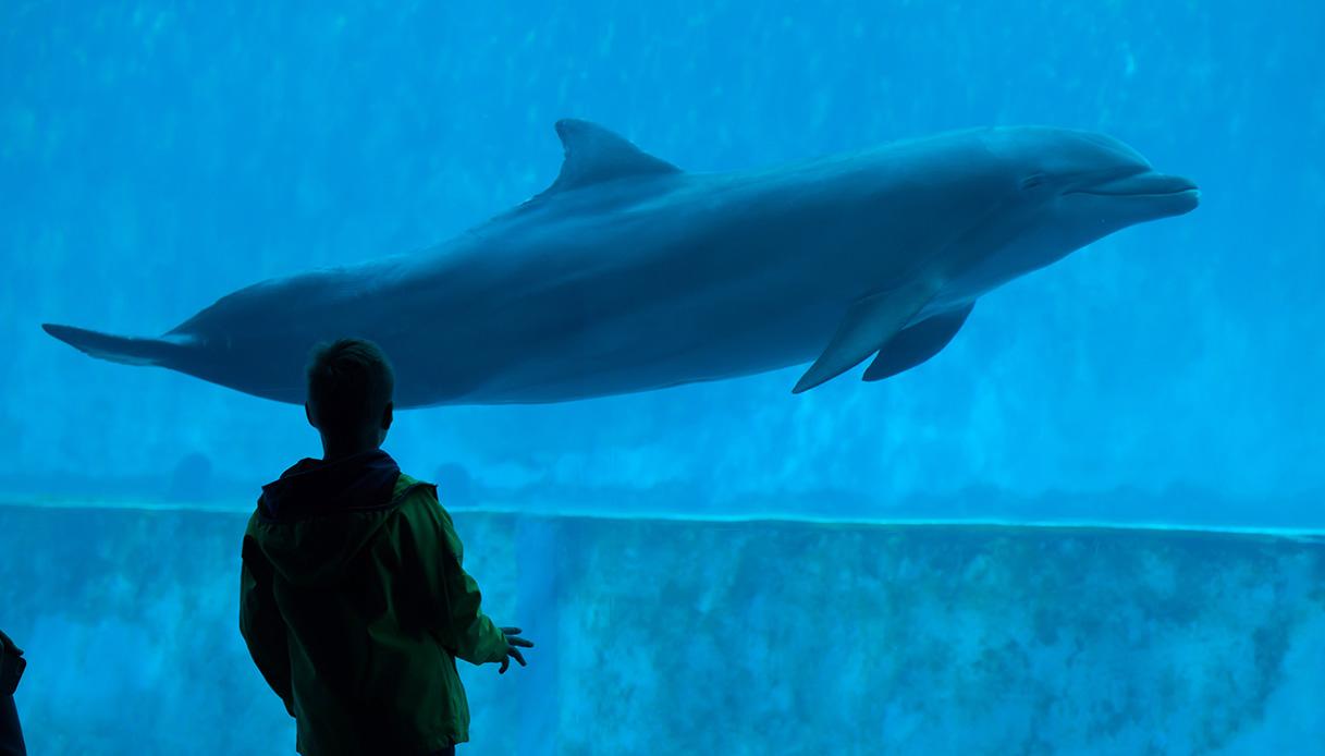 Una notte speciale all'acquario di Genova: l'esperienza di dormire con delfini e squali