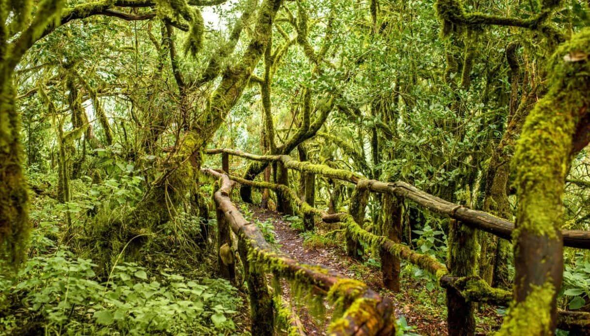Canarie: Garojonay, il cuore verde de La Gomera