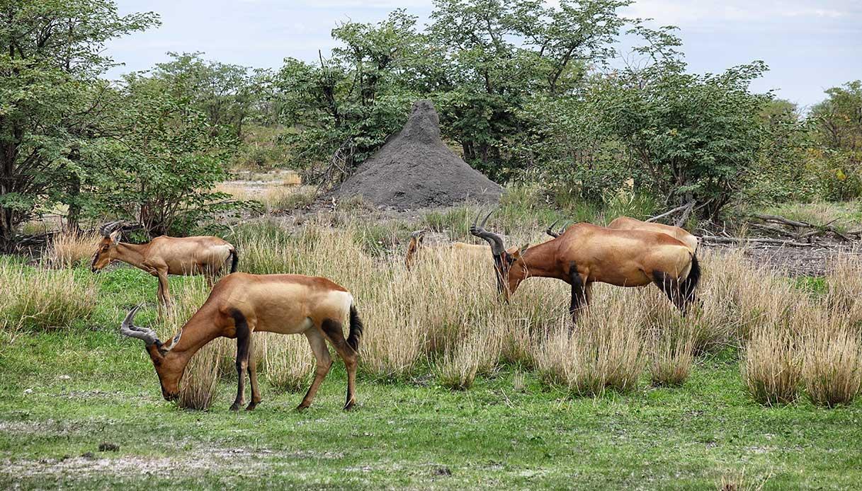 Etosha National Park animali