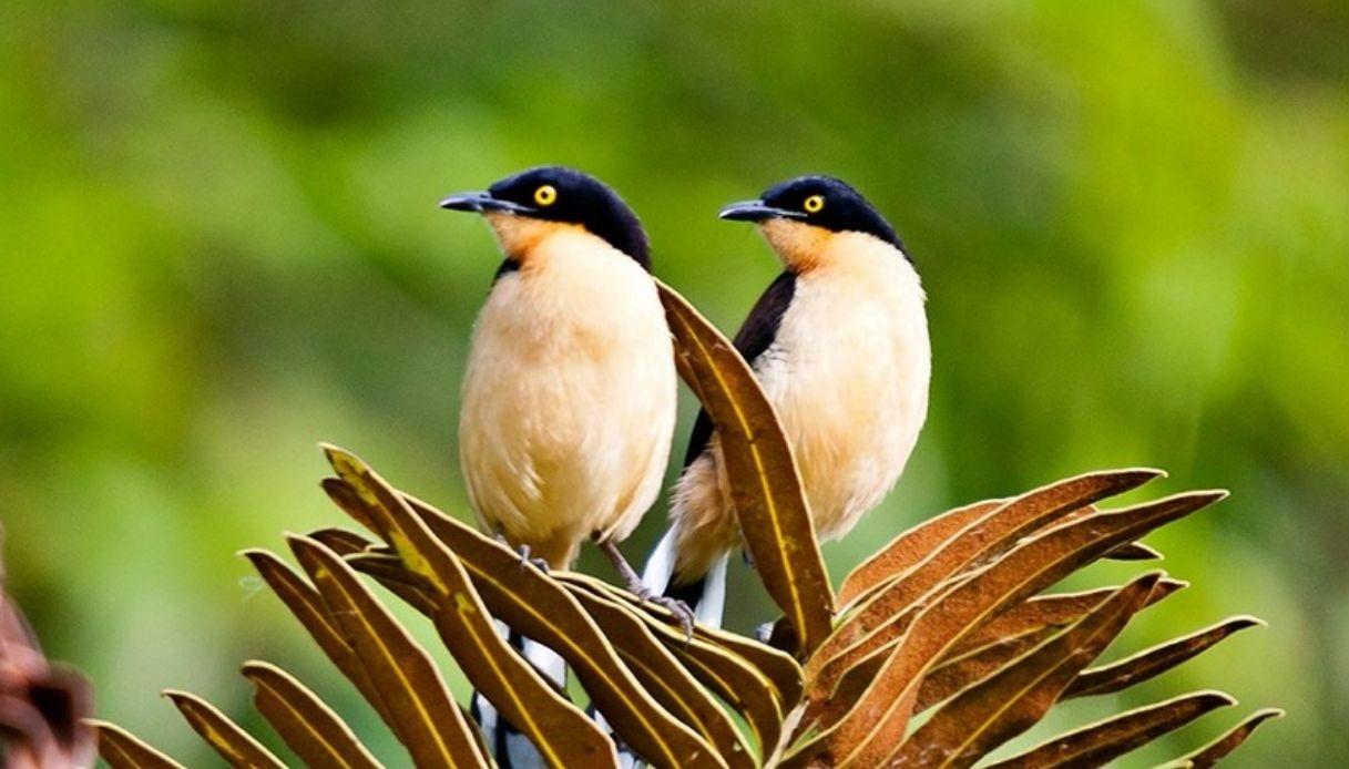 Uccelli della foresta