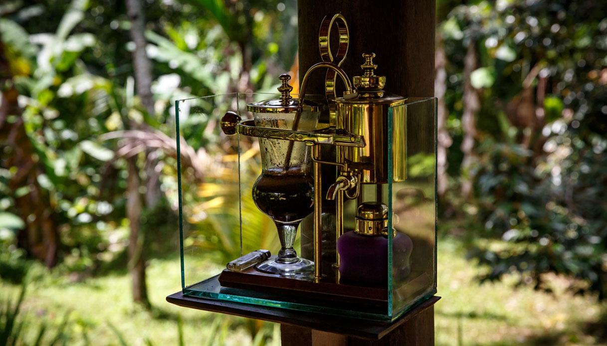 Kopi Luwak: il caffè più costoso e bizzarro del mondo