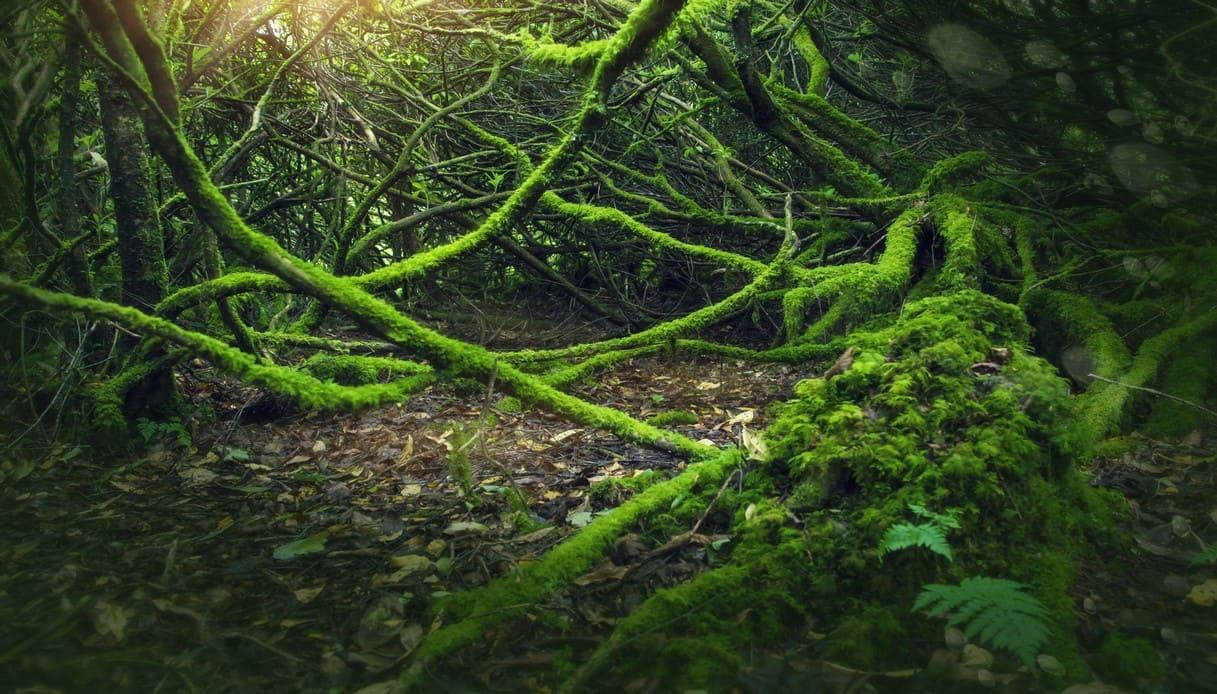 faity trees irlanda