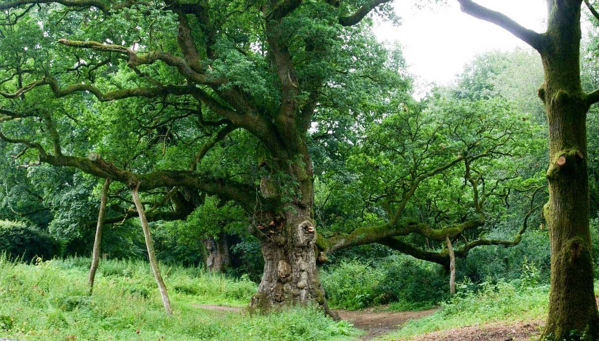 La foresta di Birman in Scozia