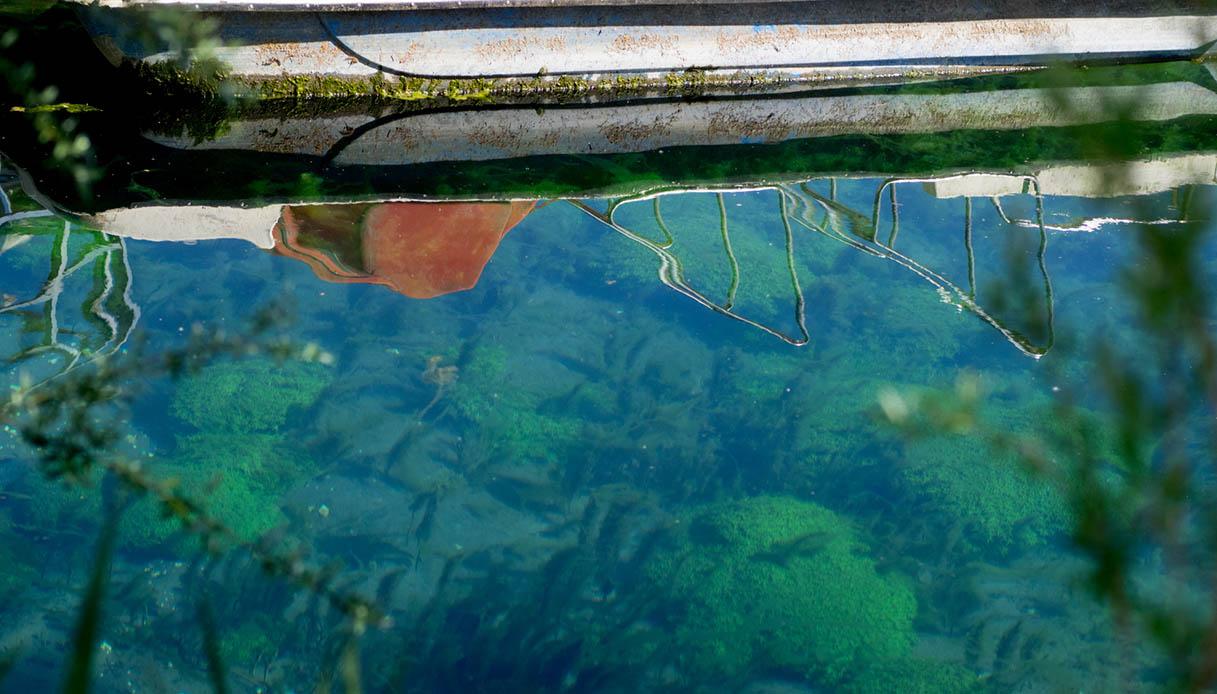 Nel lago di Posta Fibreno c'è un'isola galleggiante che incanta e stupisce