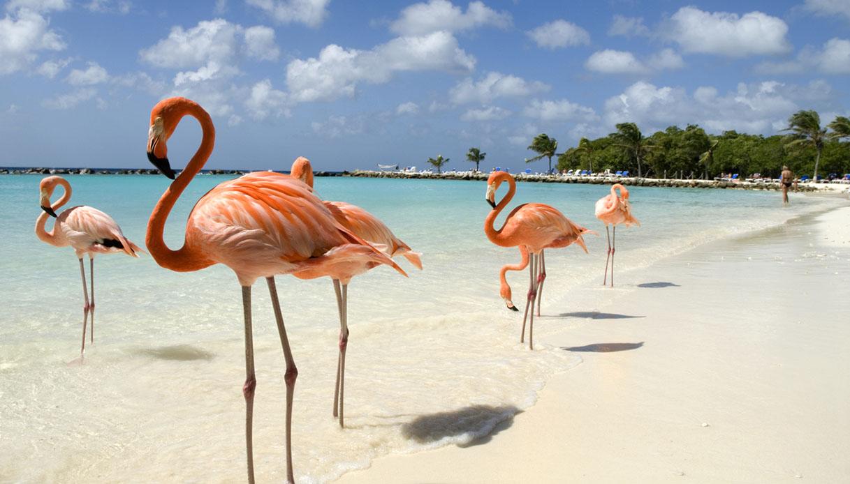 Renaissance Island e Flamingo Beach
