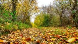 Cinque luoghi dove vedere il foliage in autunno in Italia