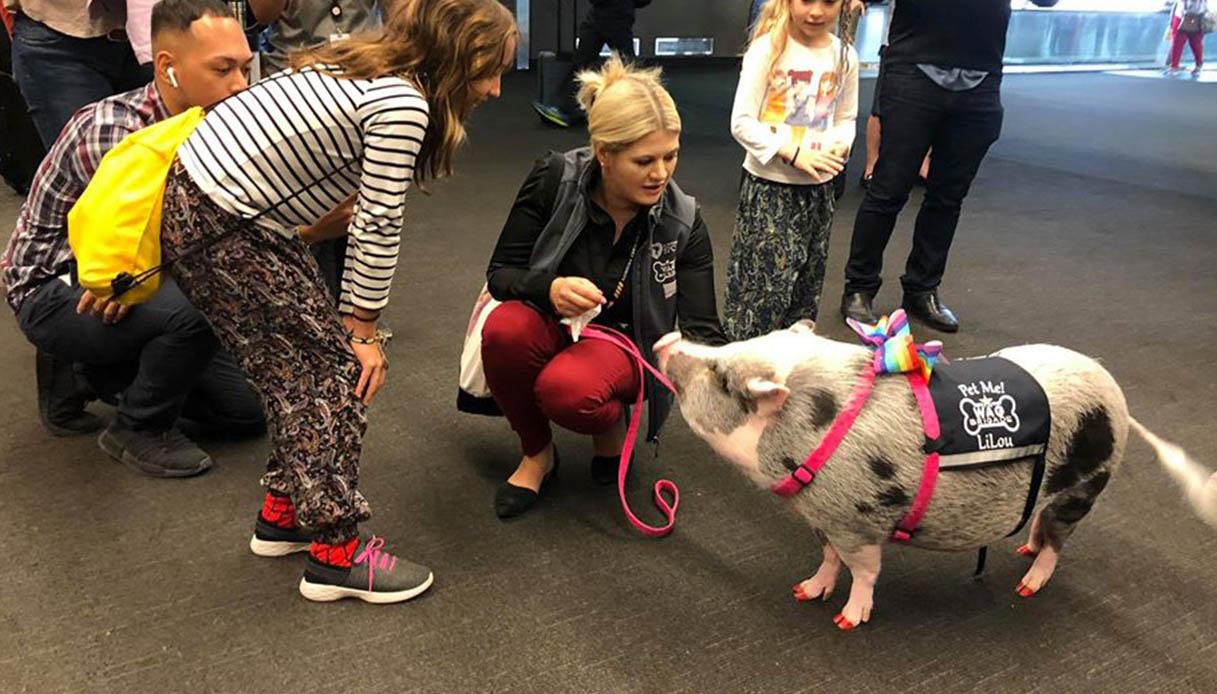 In questo aeroporto puoi accarezzare un maiale. Per rilassarti
