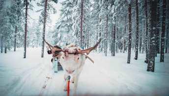 5 cose da fare in Finlandia, dalla Capitale a Rovaniemi