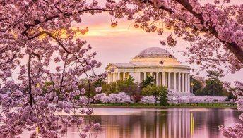 Oltre alla Casa Bianca c'è di più: 5 cose da fare per scoprire Washington
