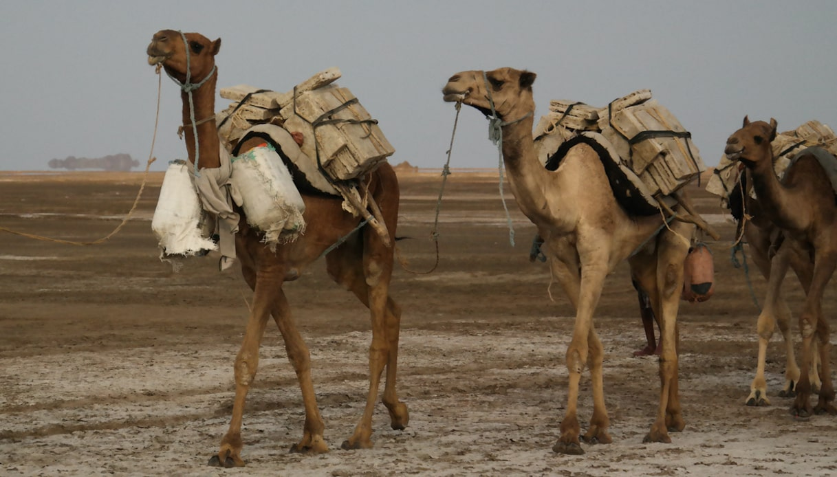 cammelli lago di assal
