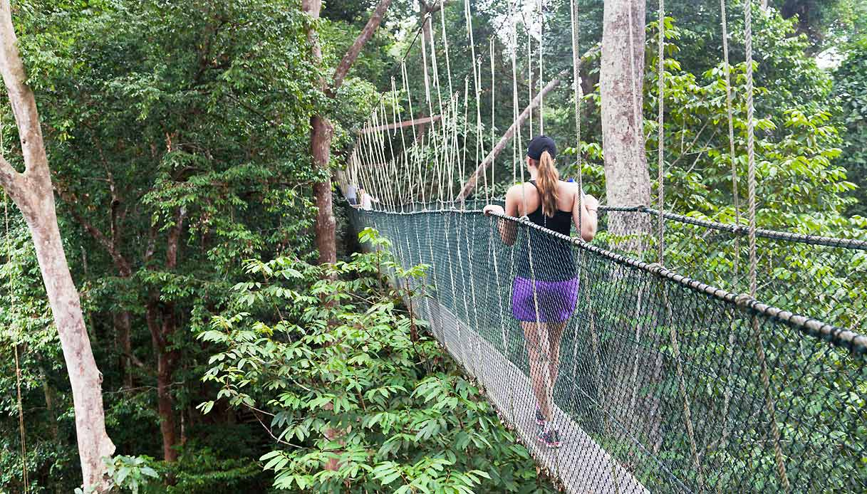 malesia-parco-Taman-Negara