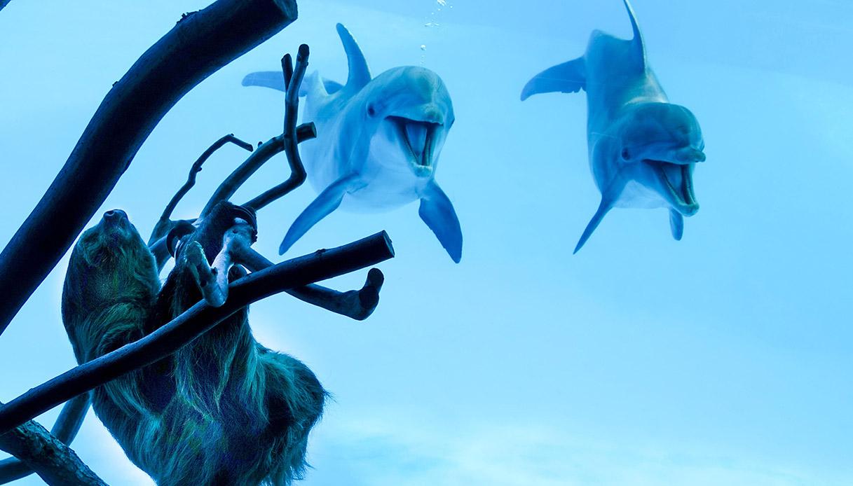 delfini e bradipo