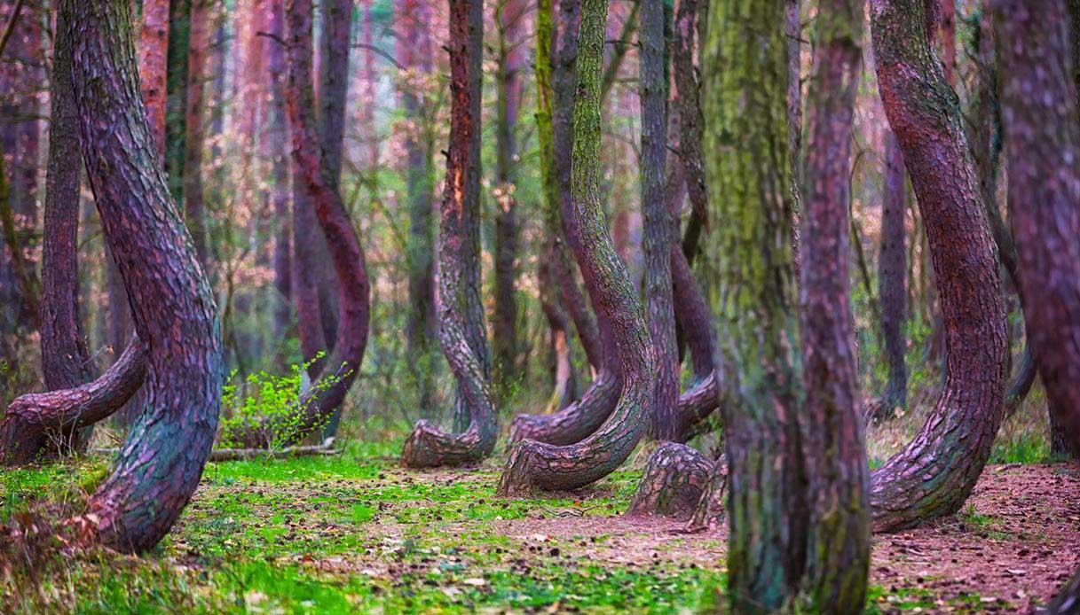 foresta storta polonia