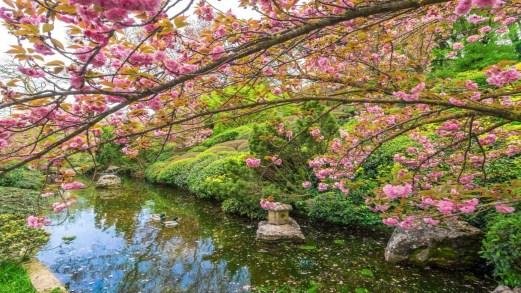 La fioritura dei ciliegi in Italia, i luoghi più magici