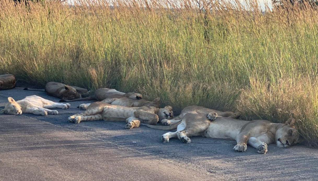 leoni sudafrica